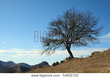 Tree In The Late Of Autumn