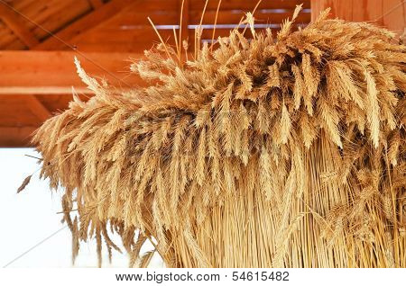 Sheaf Of Spices