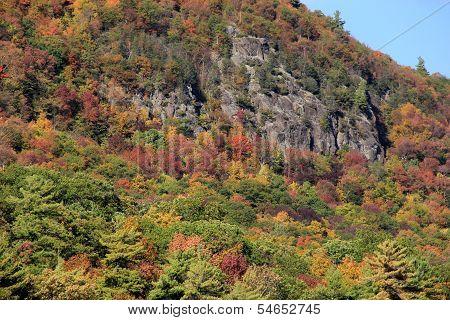 Gorgeous foliage on rocky mountainside