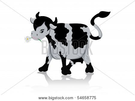 Illustration of cow chewing a flower isolated poster
