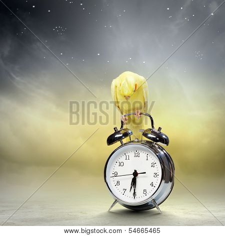 Image of yellow parrot sitting on alarm clock poster