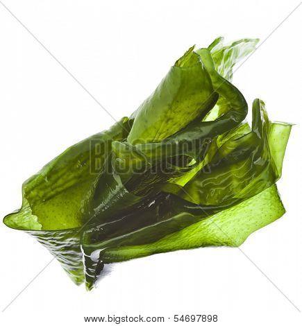 seaweed kelp ( laminaria ) wet heap pile close up isolated on white background