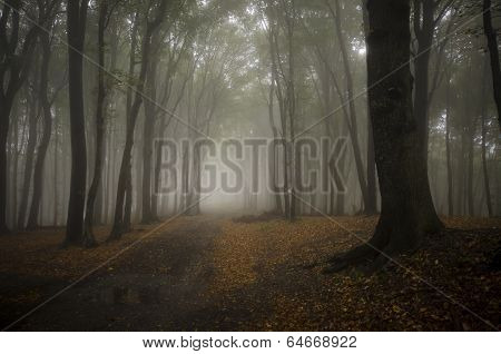 Path trough a mysterious fantasy forest with fog