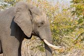 Side view of elephant head in alert poster