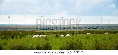 Eolic Turbines and sheeps