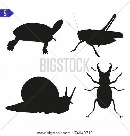 Vector silhouettes of insects and reptiles on a white poster