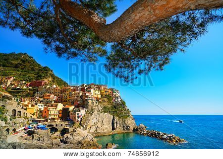 Manarola Village And Pine Tree, Rocks And Sea At Sunset. Cinque Terre, Italy