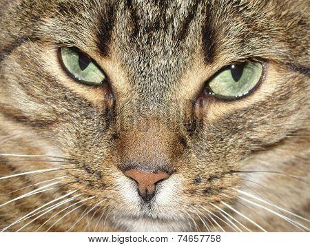 Beautiful Cat's Eyes