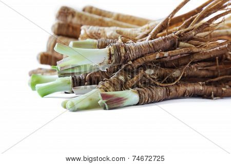 Fresh Dong Quai or female ginseng root, Chinese herbal medicine.