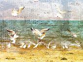 Flight of seagulls over the sea. Retro stylisation poster