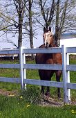 A horse behind the fence in a farm in rural areas. poster