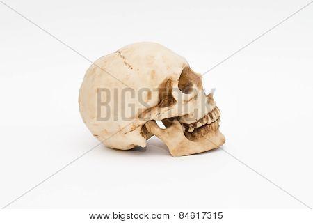 brainpan cranium death's head