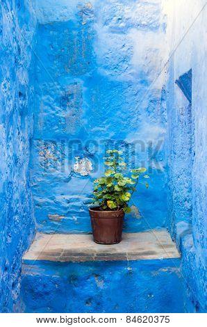 Santa Catalina flower pot