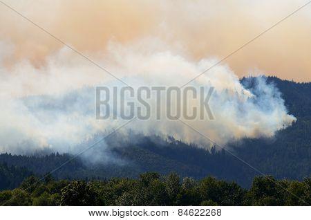 Douglas Smoke
