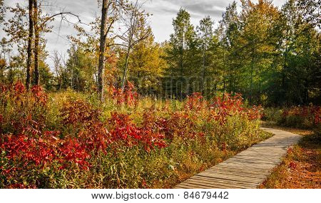 Autumn Boardwalk