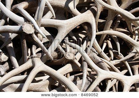 Stack Of Elk Antlers
