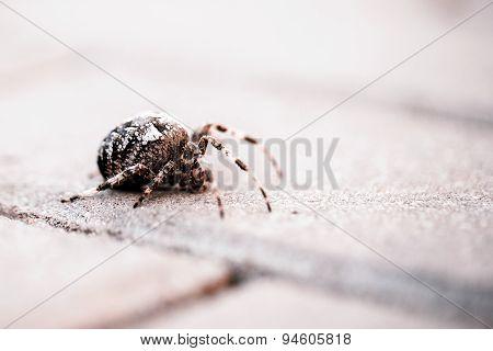 Big Orb Spider With Leaf