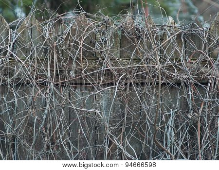 Overgrown wooden fence.