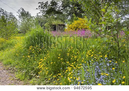 Wildflowers including buttercups forget me nots and pink campions in front of hut at Kildford Barns on the outskirts of Dumfries. poster