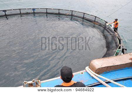 Nha Trang, Vietnam - June 23, 2013: Feeding Barramundi Fish In Cage Culture In The Van Phong Bay In