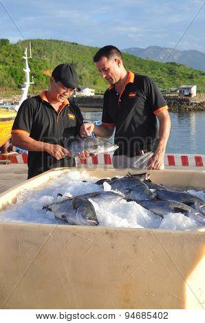 Nha Trang, Vietnam - June 23, 2013: Barramundi Fish Are Farmed In The Van Phong Bay And Exported To