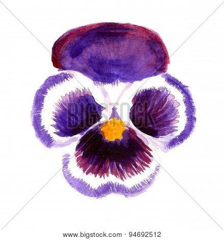 Violet pansy flower