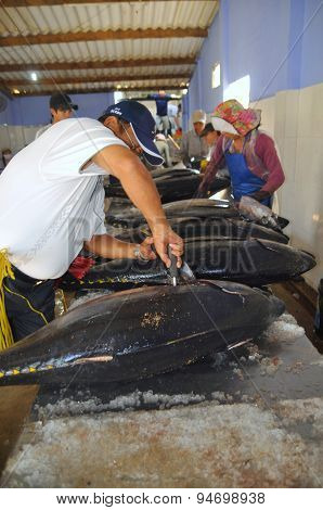 Phu Yen, Vietnam - February 28, 2012: A Chinese Middleman Is Testing The Quality Of Tuna Fish In Tuy