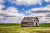 An old shed or similar kind of outbuilding on a farm in central Iowa stands before a field of early corn. poster