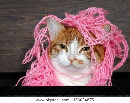 GGlamorous cat with matted pink thread on the head as a hairstyle. Portrait of funny catslamorous cat with matted pink thread on the head as a hairstyle. Portrait of funny cats