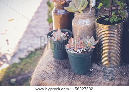 succulents in rustic tins and jars Eco and reuse concept