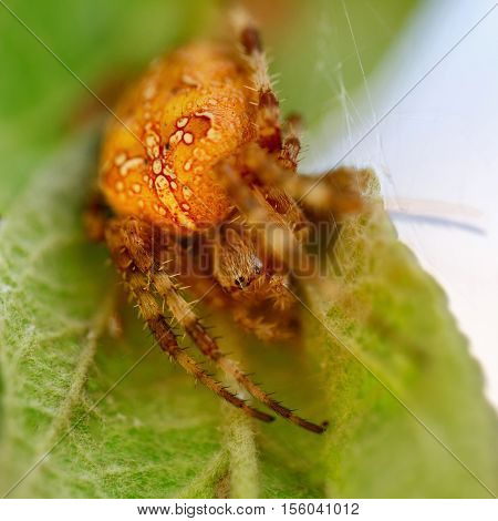 Scary spider closeup. Arachnophobia. Web close up