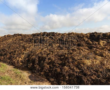 are landed in an agricultural field in a heap of manure intended for land fertilizer before planting the crop, blue sky