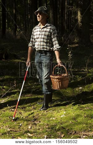 mushroom picker with walking stick on mushrooms