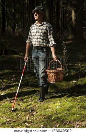 mushroom picker with walking stick on mushrooms