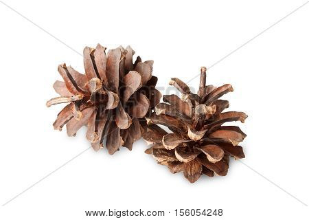 two brown pine cones on isolated white background