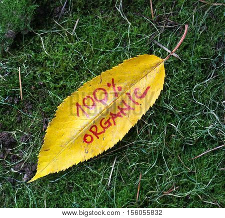 picture of a autumn walnut leaves with handwritten text 100 percent organic