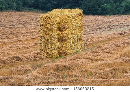 Mowed grain field with hay bales and forest in the background.
