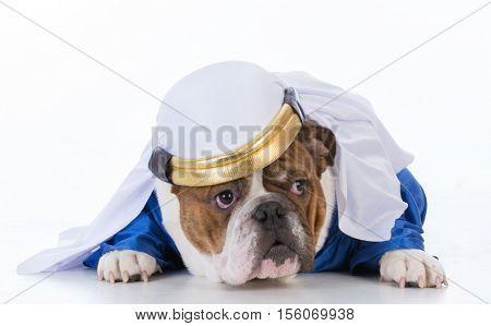 bulldog dressed like a sheik on white background