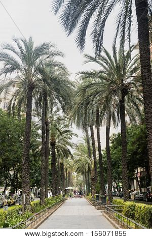 VALENCIA, SPAIN - JULY 14, 2016: Valencia (Spain) gardens in the Avenida del Regne de Valencia at evening