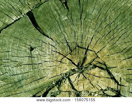 Old Green Toned Tree Cut Surface.