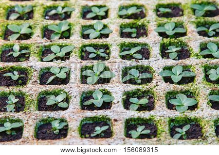 Small Greenhouse Cultivating Plant Vegetable seedlings Thailand
