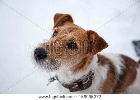 cute dog playing in snow in winter
