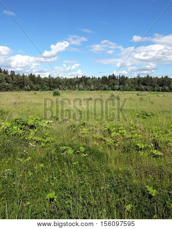 Nature landscape with green field and forest far away in sunny summer day. Vertical view