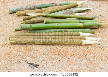 sharpened bamboo sticks on the ground used for stabbing dracular copyspace