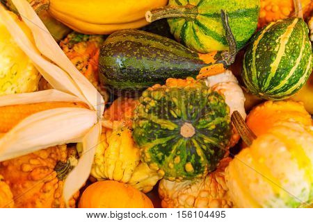 Cucurbits On Sale In A French Market