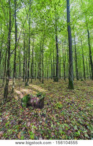 green forest - landscape. juicy leaf color