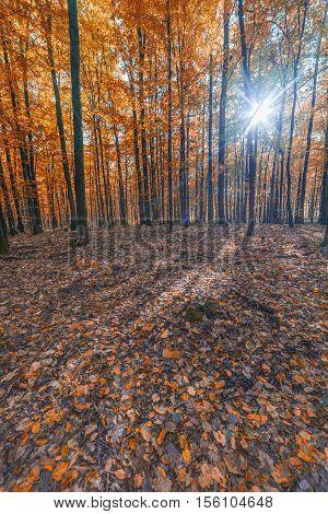landscape. colorful autumn forest. sunlight. autumn colors