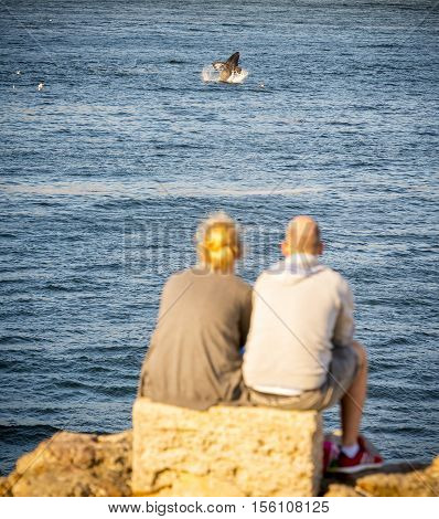 Couple In Hermanus At Sunset Whale Watching