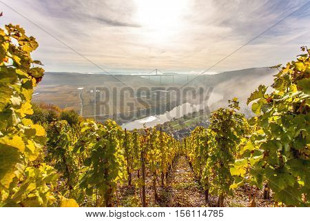 Autumn Colorful Moselle Landscape And Vineyards