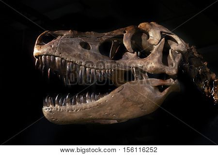 Dinosaur skull on black background - reconstruction